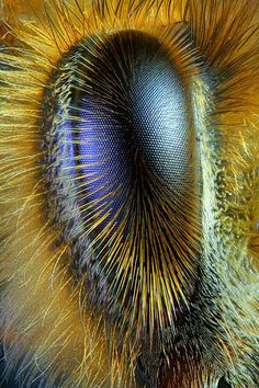 "lalulutres: "" Eye of a honeybee """