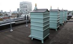 Fortnum and Mason's four hives belonging to the Queen. The bees forage in the Royal Parks opposite and in the gardens of Buckingham Palace.