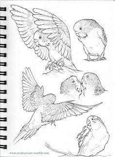 ☆★☆parakeets
