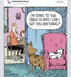 Speed Bump by Dave Coverly for July 03 2019 - GoComics Dog Jokes, Funny Dog Memes, Funny Dogs, Dog Humor, Funny Quotes, Dog Comics, Funny Comics, Memes Humor, Funny Shit