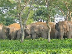 East Karbi Anglong Wildlife Sanctuary - in Assam, India