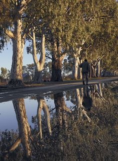 Selfportrait along a Eucalyptus tree (or 'Blue Gums', as South African call them) lined gravel street in the town of Nieuwoudtsville. African Tree, Eucalyptus Tree, Art Walk, Zimbabwe, Planet Earth, South Africa, Beautiful Places, Deserts, Leaves