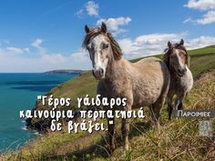 Psygrams Ideas in words Echeveria, Horses, Greek Quotes, Animals, Greece, Animales, Animaux, Horse, Animal Memes