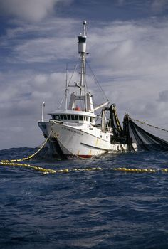 Purse seine fishing for southern bluefin tuna in the Southern Ocean.