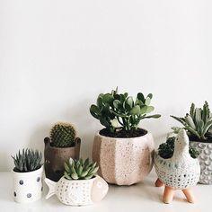 : @dashacrawfordphoto #succulents #succulent #succulove #suculentas # #cactus #cacti #kaktus #サボテン #선인장 #nature #plants #plant #گیاه #گل #ساکولنت #کاکتوس #succulentgarden #succulentaddict #succulentlover #succulentsofinstagram #succulenthoarder #suculenta #succulents_only #succulentjunkie #succulentplant #sukulent #succulentobsession #leafandclay #suckerforsucculents . . please see my other pages: . @amin_hajimohamadi_ @amin__hajimohamadi