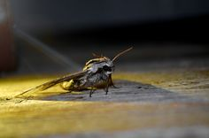 A picture of a moth taken by me and my Nikon.