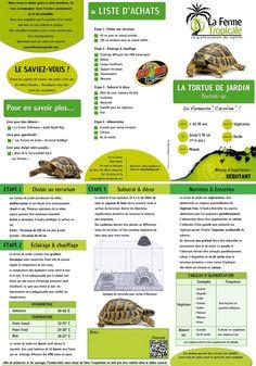 Testudo hermanni boettgeri, cm - My Reptiles World 2019 Tortoise As Pets, Tortoise Food, Tortoise Care, Tortoise Turtle, Animals Of The World, Animals And Pets, Esio Trot, Terrarium For Sale, Python Snake