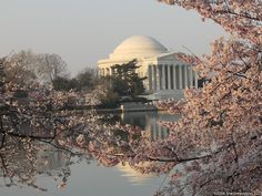 I miss being in Washington DC. LOVE Cherry Blossoms