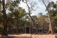 Banteay Srei Cambodia - 10th century Temple Overgrown with Trees