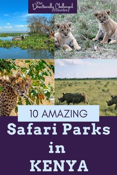 Is spotting the big 5 on your bucket list? Here are 10 incredible safari parks in Kenya - where to go, where to stay and what to see! Kenya Travel, Big 5, African Safari, Where To Go, Places To See, The Good Place, Parks, Travel Tips, Wildlife