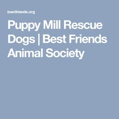 Puppy Mill Rescue Dogs | Best Friends Animal Society