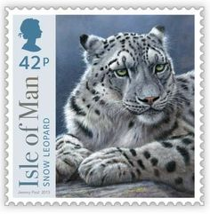 Big Cats from Isle of Man - Snow Leopard