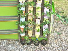 Bottle towers in Australia (Rachel CHRISTIAN) | Container Gardening