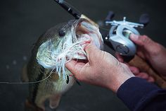 Slow Rolling Spinnerbaits For Big Bayuiuyiuyiss