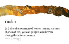 """""""ruska"""" (Finnish) - the phenomenon of leaves turning various shades of red, yellow, purple, and brown during the autumn season"""
