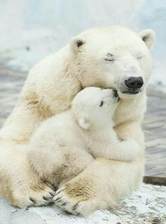 Mother's love #Bears #motherhood