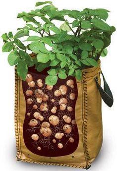 plantar patatas en una bolsa                                                                                                                                                                                 Más