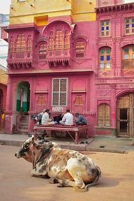 Koe op straat in Bikaner, Rajasthan, India Nepal, Varanasi, The Places Youll Go, Places To See, Beautiful World, Beautiful Places, Beautiful Buildings, Places To Travel, Travel Destinations