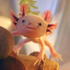 Axolotl :o