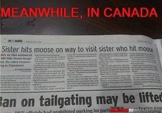 """Meanwhile in Canada…or nearly my own car. As my sister says: """"At least it's not mooses, or meese.or mice? Canadian Memes, Canadian Things, I Am Canadian, Canadian Humour, Best Memes, Funny Memes, Funny Headlines, Meanwhile In Canada, All That Matters"""