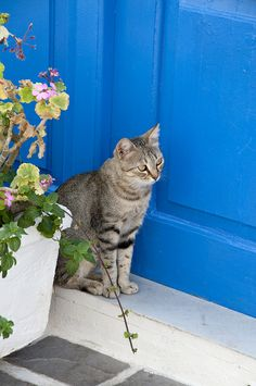 Kythira, Greece. Guarding the door :-)