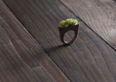 wooden ring with living herbs. i just want it so badly