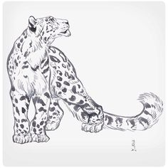 Old snow leopard sketch that I drew with a Pentel Aquash as a gift for Jonathan Kuo who is a truly incredible animal artist- check out his work: @jonnadon1 #JAWCooper #pentelaquash