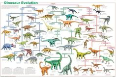 Dinosaur Evolution Poster and thousands more of the very best toys at Fat Brain Toys. Our Dinosaur Cladogram visually portrays the evolution of the most well-known species. Over 50 representational species are shown; Aids Poster, Poster Poster, Poster Wall, Science Chart, Kid Science, Science Nature, Dinosaur Posters, Animal Posters, Animal Classification