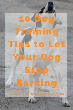 10 Dog Training Tips to Let Your Dog Stop Barking | Dog Training Tips | Dog Obedience Training | Dog Training Commands | http://www.dogtrainingadvicetips.com/10-dog-training-tips-let-dog-stop-barking