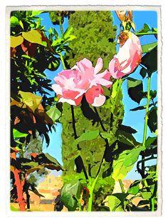 Le rose Tiberio http://ilmioblogdiprova.over-blog.it/2013/10/le-rose-tiberio.html