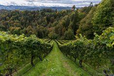 Tasting Menu, Tasting Room, Visit Austria, Types Of Wine, Pinot Noir, Wine Making, Hotel Spa, Rum, Harvest