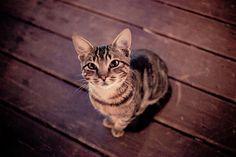 Mr. Pussycat