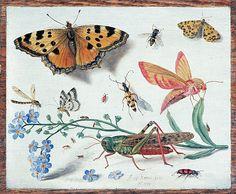 Jan van Kessel (1626-1679)