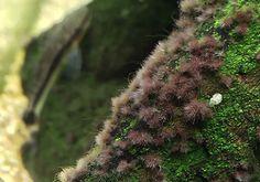 Alga tájékoztató, alga elleni védekezés Green Aqua Plants, Black, Seaweed, Black People, Plant, Planets