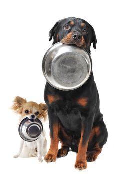"""Comment choisir les croquettes pour son chien ?Article avec calcul protéines/glucides """"inquiétant"""" !"""