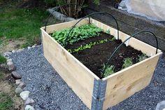 Grønnsakshagen: Kjøkkenhagen vår