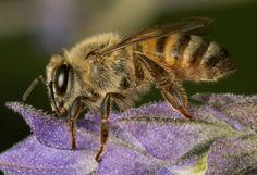 Clean bee