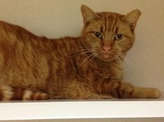 Tangerine - I am a 1 1/2yr old female in need of attention. ADOPT ME! http://www.animalkind.info/content/Adoption_Application/Adoption_Application