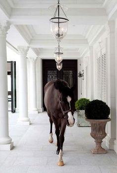 If I had a house like this......my horse could roam wherever he pleased