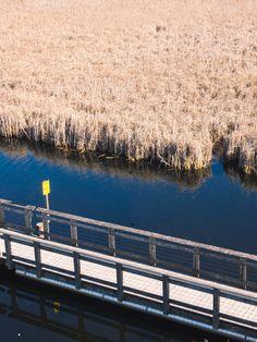 Escapade en Ontario #2 : Marcher sur l'extrémité du Canada au parc national de la Pointe Pelée Escapade, Canada, Parc National, Ontario, Landscape, Travel, Scenery, Landscape Paintings, Corner Landscaping