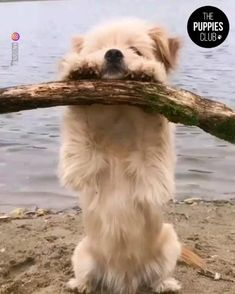 Cute Wild Animals, Baby Animals Pictures, Super Cute Animals, Cute Animal Photos, Cute Animal Videos, Cute Little Animals, Animals Beautiful, Funny Animal Pictures, Pictures Of Cute Dogs
