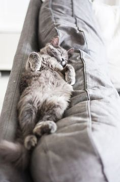 Couch kitty