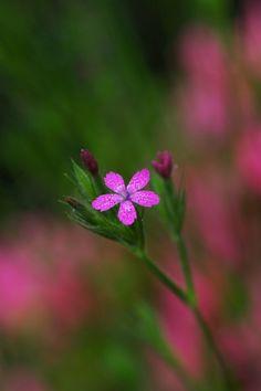 troubadourさんの初夏の風に - 写真共有サービス 「写真部」 byGMO