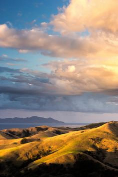 Port Jackson Hills, Coromandel, North Island, New Zealand