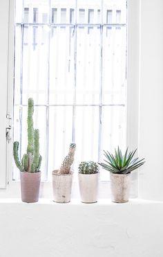 Sugestão para trazer um pouco de paisagismo para dentro de casa e para espaços pequenos. Plantas que compõe o estilo jardim desértico.