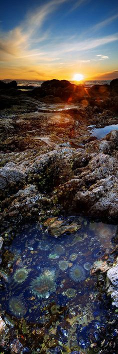 Beautiful vertical panorama of tide pools and the setting sun over the Pacific (+tutorial!) Photo: Matthew Savill