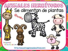 Tipos de animales claseficación (6) Teaching Activities, Teaching Science, Science For Kids, Classroom Activities, Science Ideas, Zoo Animals, Cute Animals, Quiet Girl, First Grade Science