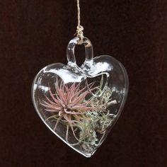 heart terrarium