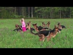 Distraction: Girl with 14 dogs