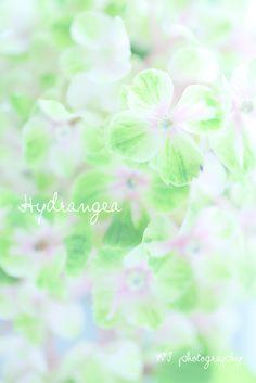 Kawaii~♪Hunter Journal * nagoya